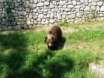 Bear on Spormaggiore, Paganella